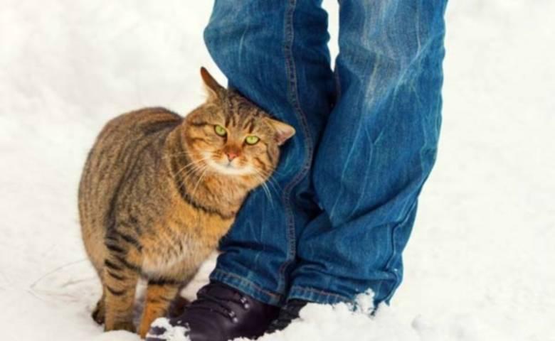 Трение кошек о ноги человека и мурлыканье могут многое рассказать об их состоянии