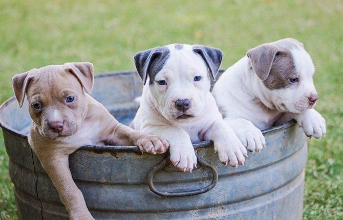 Три щенка в корыте фото