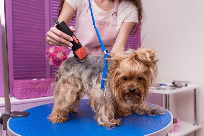 Триминг собак - что это, чем делают, кому он нужен и как часто