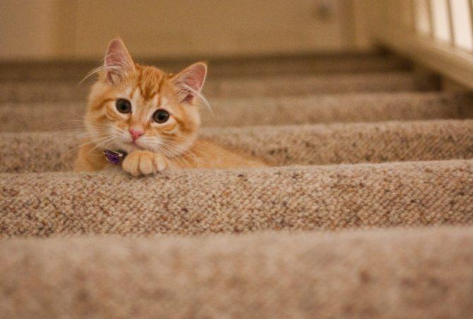 Трудности с приучением кошки к лотку