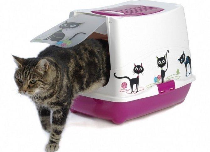 Туалет-домик наиболее удобен для взрослых кошек