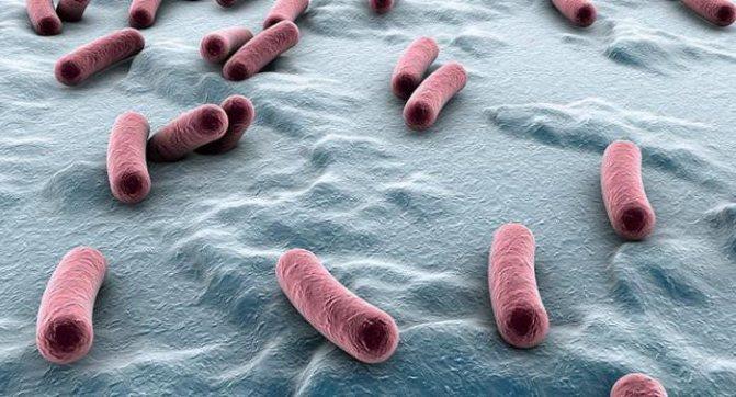 Туберкулез кишечника у КРС