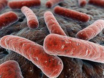 туберкулез животных