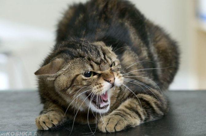 У кошки что-то болит