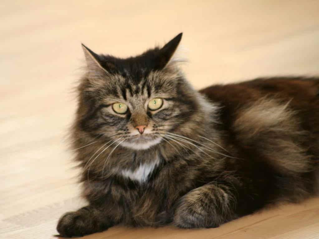 У кошки глисты как узнать не заразилась ли я