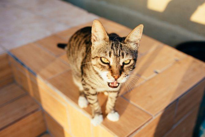 У кошки один зрачок узкий другой широкий потом один опух — My Darling Cats