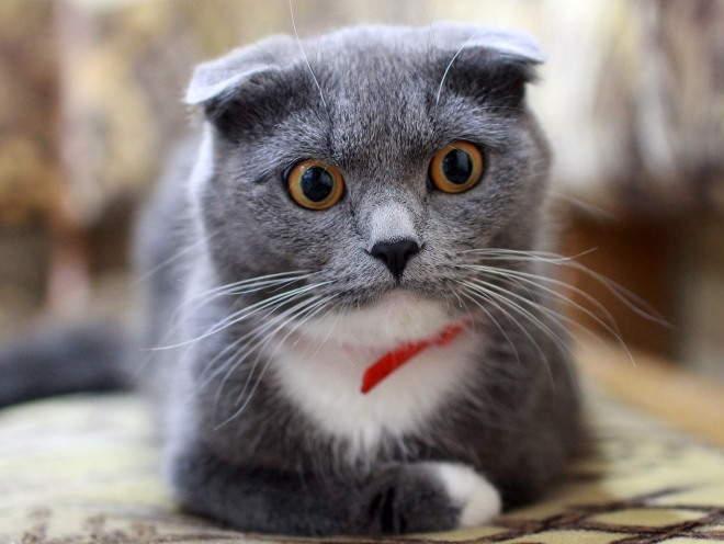 У кошки удивленный взгляд