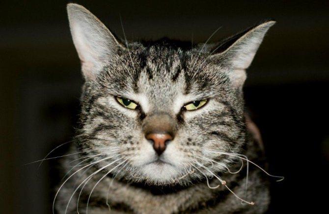 у кота ломкие усы
