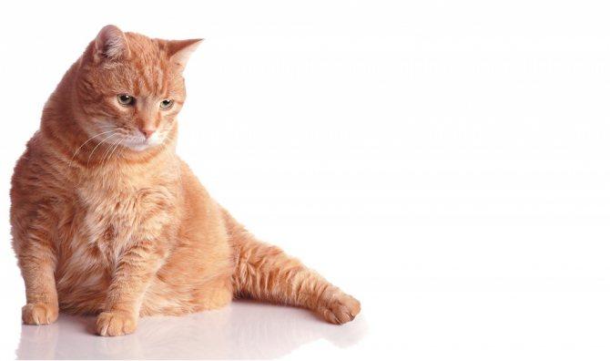 у кота отнимаются лапы при грыже на межпозвоночном диске