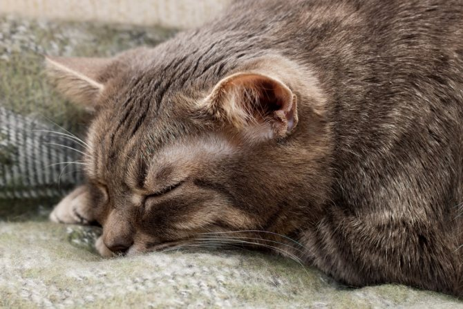 у кота отнимаются лапы при неправильно поставленном уколе