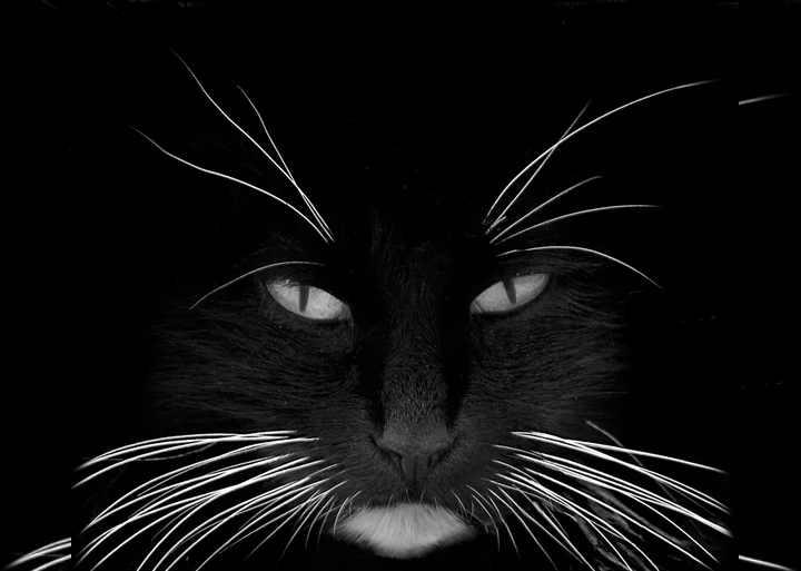 У кота выпадают усы причины что делать стоит ли беспокиться