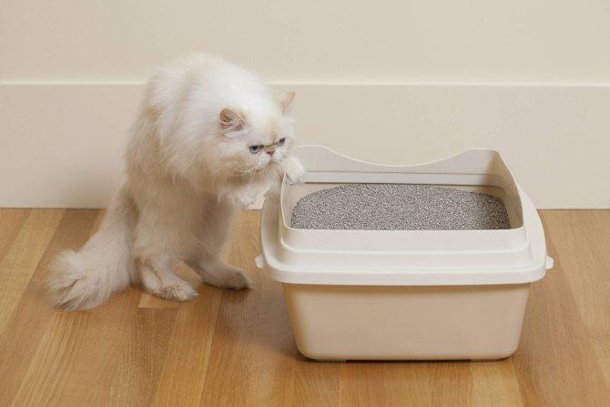 У кота желтый понос