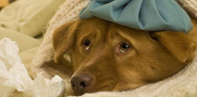У собаки понос, что делать дома, на фото больной пёс