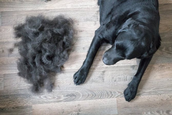 у собаки выпадает шерсть