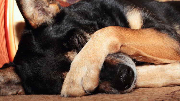 у собаки выпадают зубы что делать