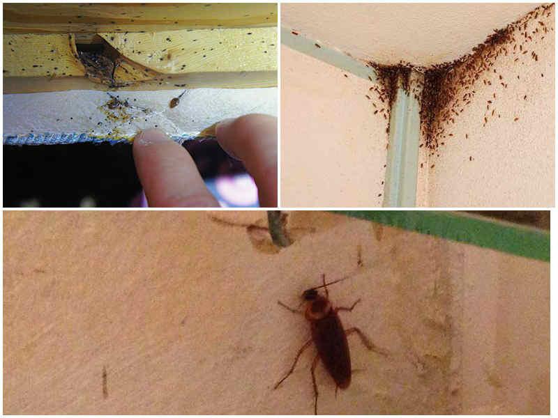 У соседа тараканы что делать по закону