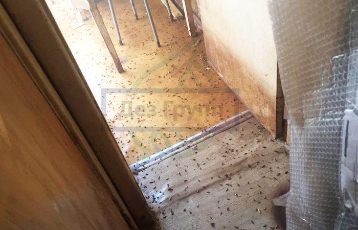 У соседей тараканы: куда жаловаться