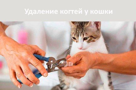 Удаление когтей у кошек - советы, секреты, рекомендации