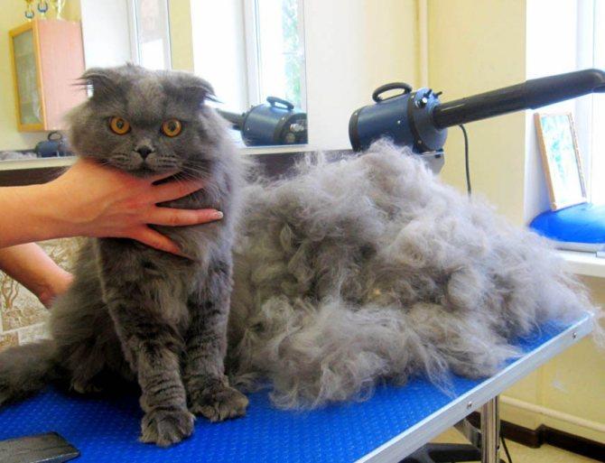 Удаление колтунов у кошек