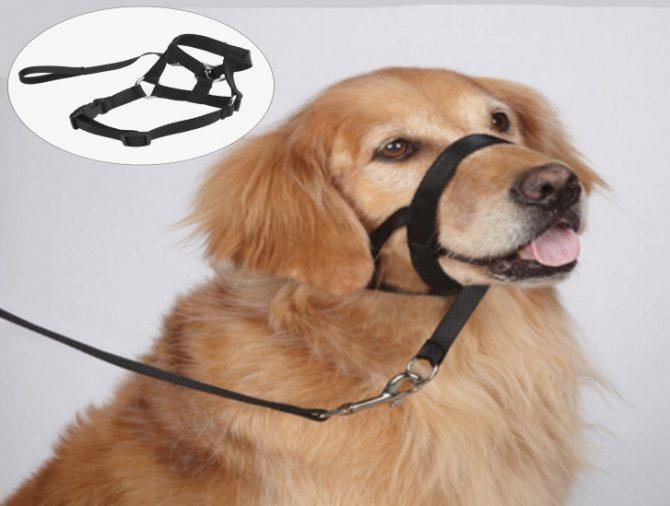 Удобный намордник для собаки