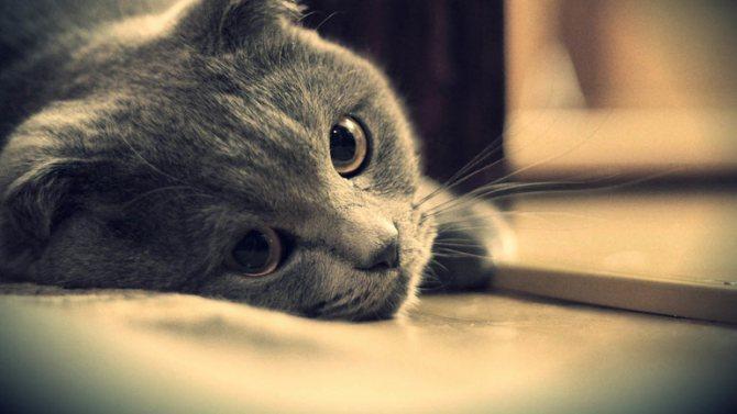 Угнетенная кошка