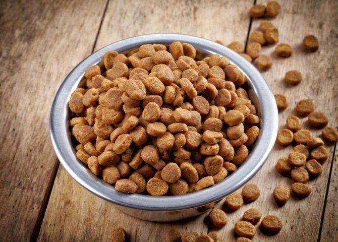 Уход и питание ориентальной кошки