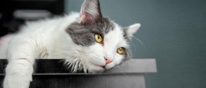 уход за зараженным коронавирусом котом