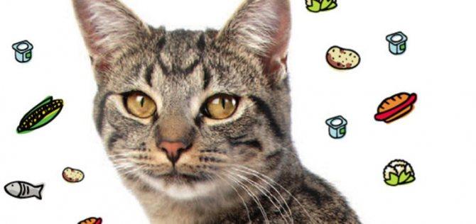 Укреплению защитных функций кошки