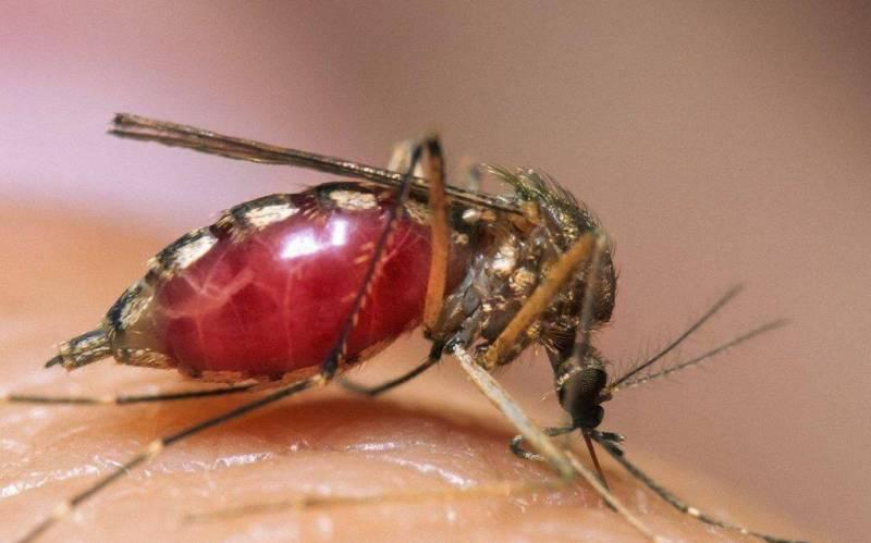 Укус комара: описание, опасность для человека, способы лечения
