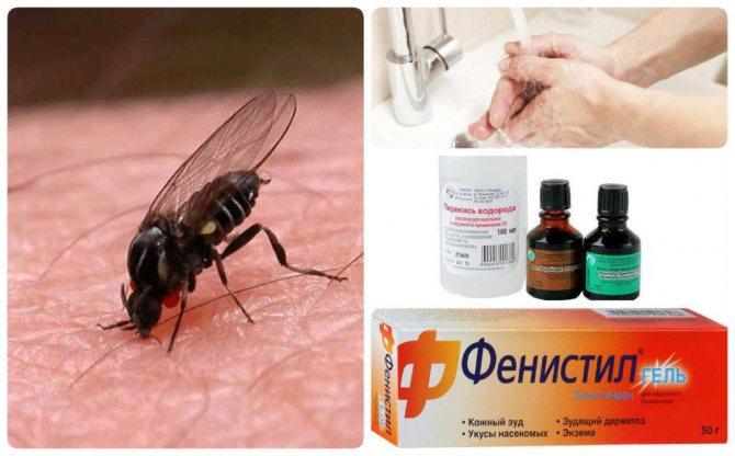 укус мухи помощь