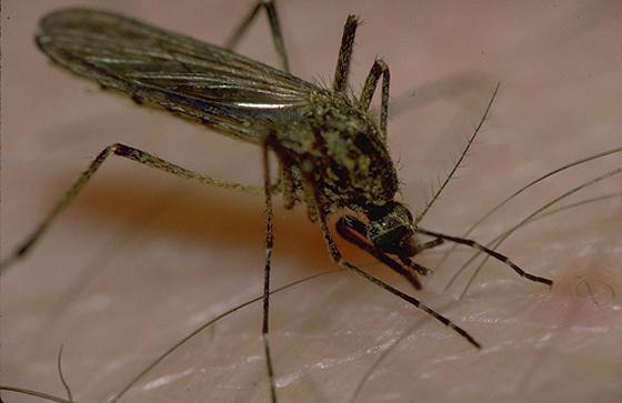 укус насекомого опухоль