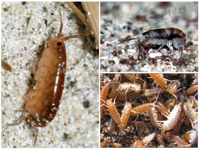 укусы насекомых в тайланде