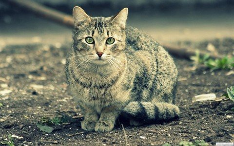 Уличные коты живут недолго