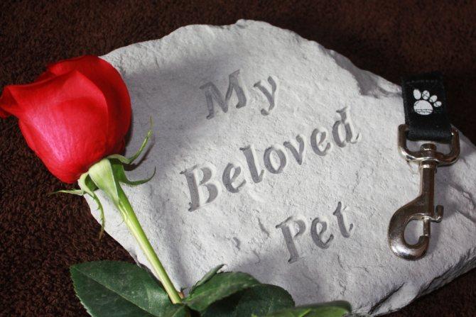 Умер кот - что делать, поведение животного перед смертью
