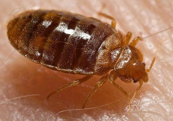 Уничтожение тараканов в Москве с гарантией качества