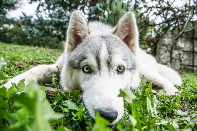 Упрямый и своенравный пес