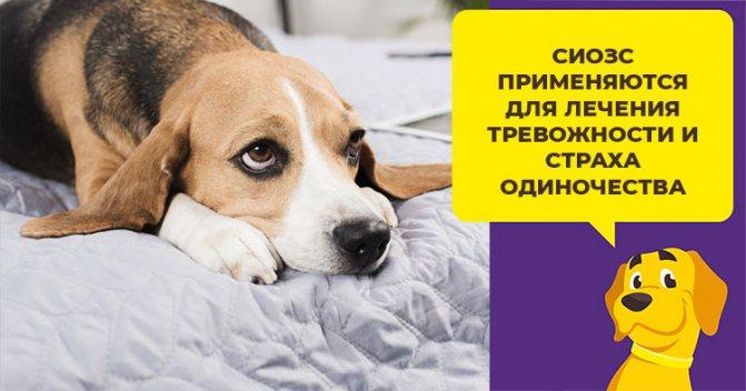 Успокоительные средства для собак: таблетки, капли и другие препараты