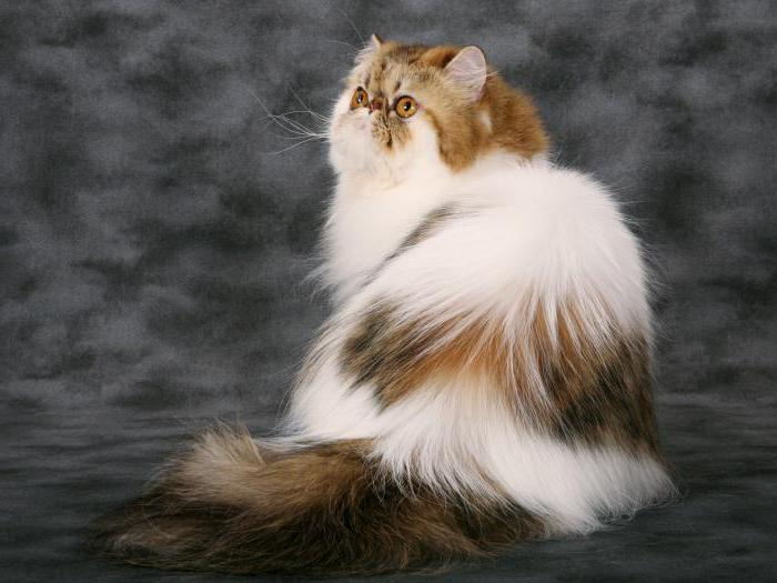 устройство колтунорез для кошек