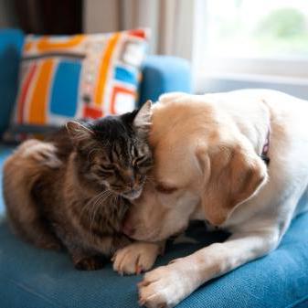 в доме кошка и собака