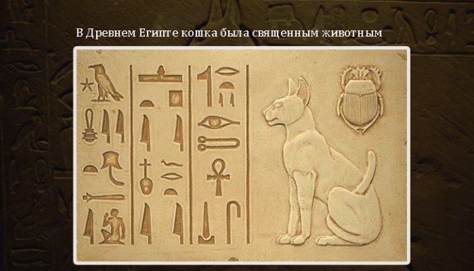 В древности кошек считали священными животными