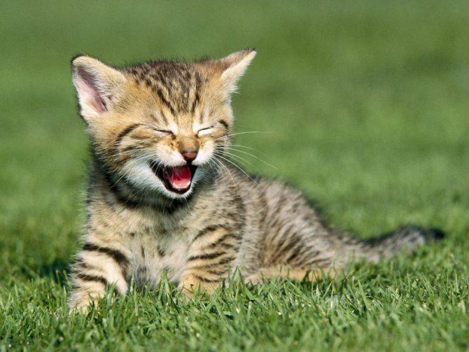 В какие игры можно играть с котенком?