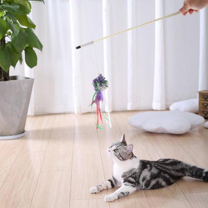 В какие игры поиграть с любимым котиком?