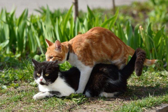 В каком возрасте коты начинают гулять и сколько времени