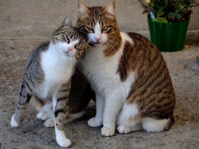 В каком возрасте коты начинают метить территорию