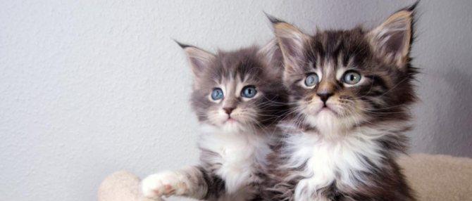 В каком возрасте котята начинают ходить в туалет и есть самостоятельно