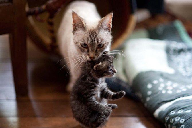 В каком возрасте лучше брать котенка?