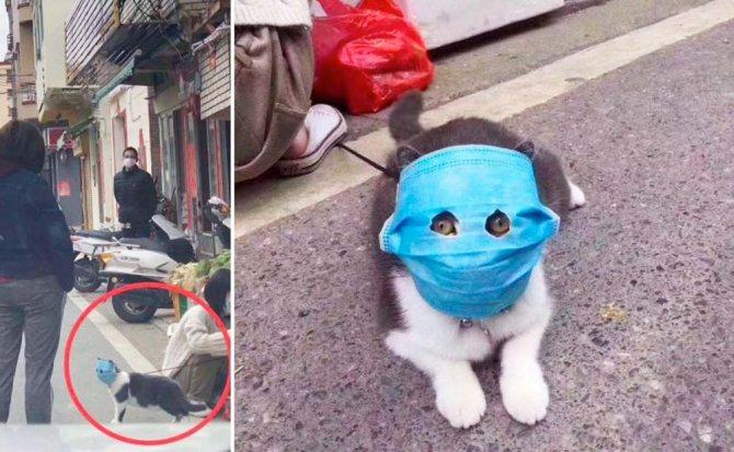 В Китае появился кот-борец с коронавирусом