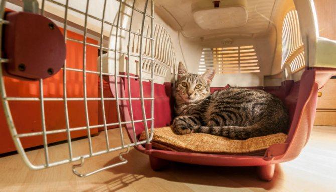 В переноске кошке должно быть достаточно места