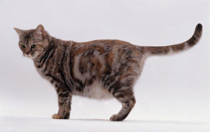 В первый раз с икотой котята знакомятся еще будучи в утробе матери