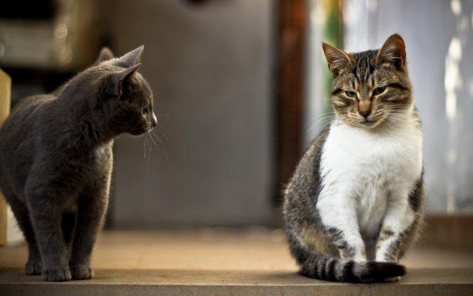 В течение дня необходимо менять кошек местами
